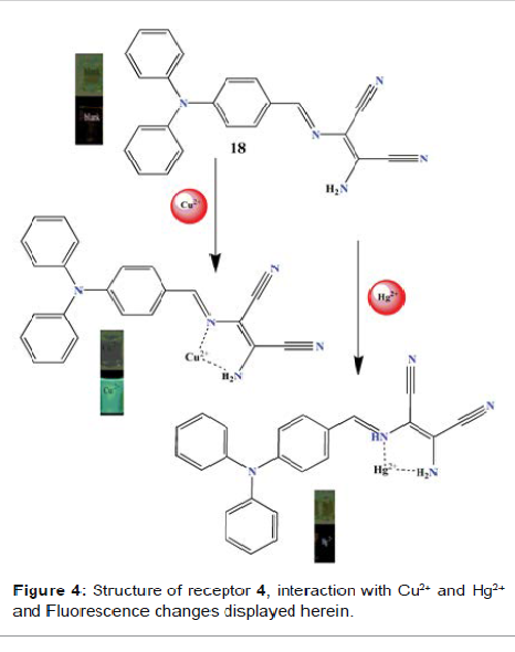 interaction with Cu2+ and Hg2+