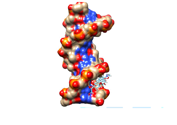 docking of doxorubicin in the minor groove of DNA