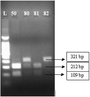 PCR-restriction enzyme