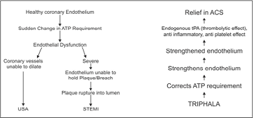 Endothelial Cell Dysfunction/Endothelium Strengthening