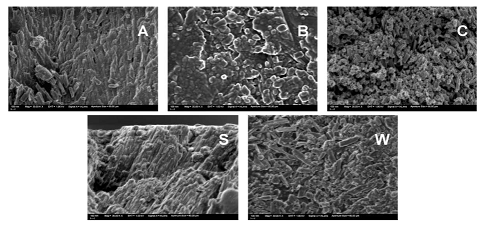 High magnification (30,000x) FE-SEM images of randomly selected enamel slice cross-sections.