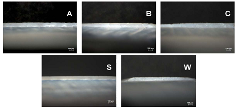 Darkfield reflected light images (Neofluar lenz, 50x magnification, Axio Imager 2, Zeiss Corporation, Germany) of randomly selected enamel slice thickness (about 100 μm) for each of the five groups. The letters correspond to the following groups: 0.21% NaF dentifrice (A); 1.1% NaF dentifrice (B); 0% NaF dentifrice (C); sound enamel control (S); and, WSL control (W).