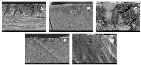 Low magnification (2,000x) FE-SEM images of randomly selected enamel slice cross-sections.