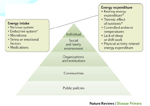 Key factors involved in the regulation of energy balance