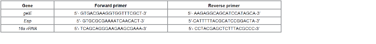 primers of gelE, esp and 16srRNA