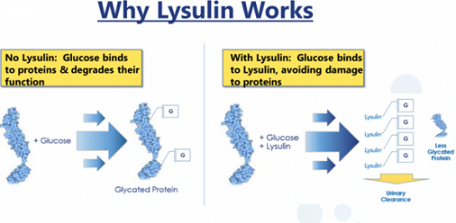 Mechanism for Inhibition of Protein Glycation by Lysulin