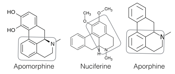 Psychoactive aporphines from the Blue Nile Flower all based on the quinoline structure as highlighted.