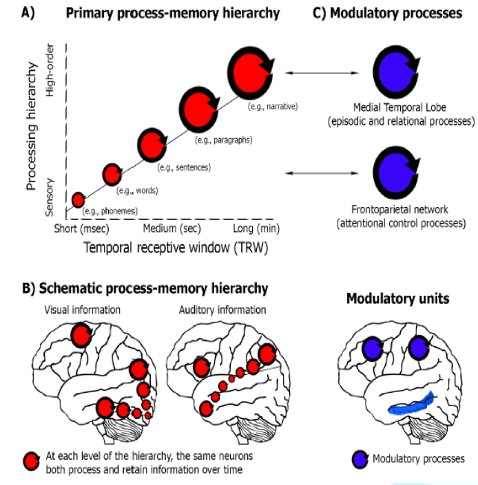 A Neuroscience model of reading. From Hasson, Chen, and Honey (2015).