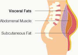 Image explains about visceral obesity