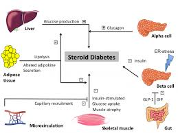 Image explains about Steroid diabetes