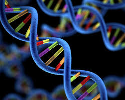 This is the image related to Genomics Study Source - Wikipedia