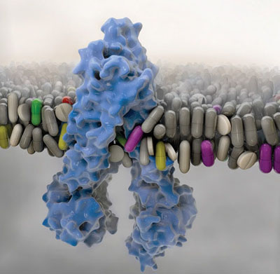 This image is related to Biopharmaceutics - Source Wikipedia