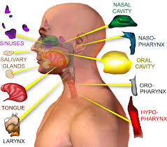 Image explains about Head and neck cancer