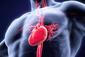 Image showing the heart