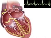 Image showing the heart with ECG