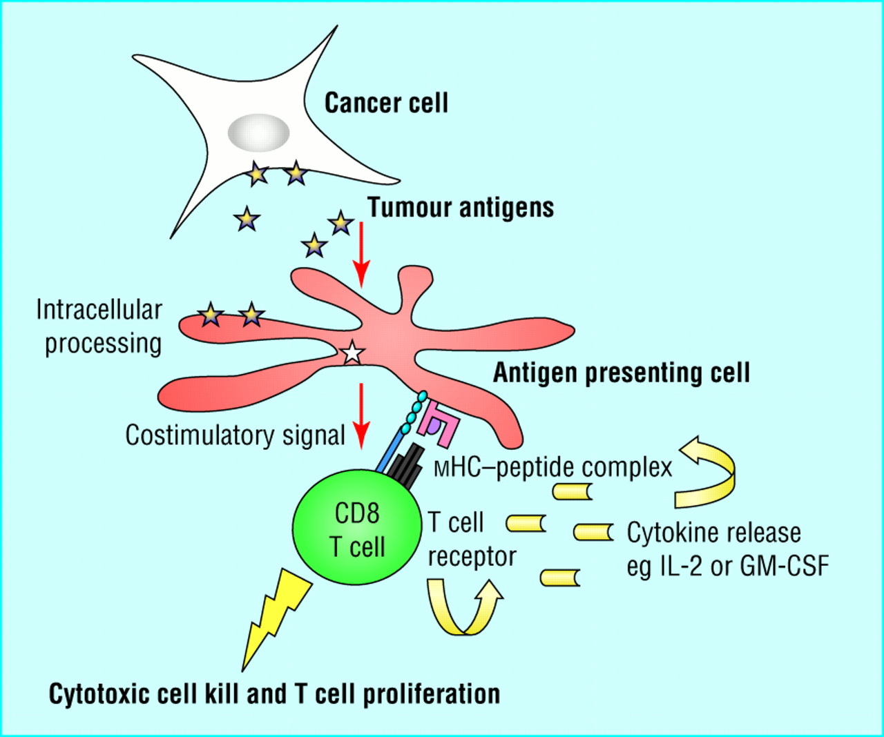 Image explains about Cellular immunotherapy