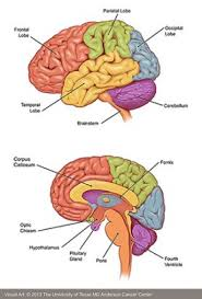 Image explains about Brain metastases -source Wikipedia